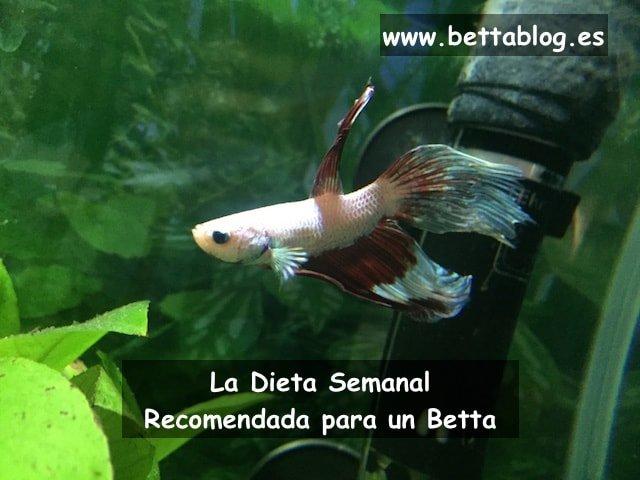 Dieta Pez Betta