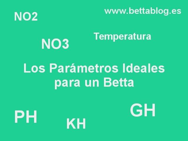 Los Parámetros de Agua Ideales para un Betta
